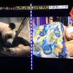 マツコデラックス×月曜から夜ふかしブレずに毎日パンダを撮り続ける人